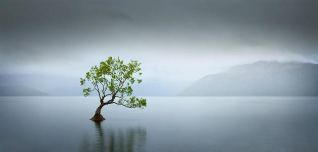 Solo-Tree_Neville-Jones
