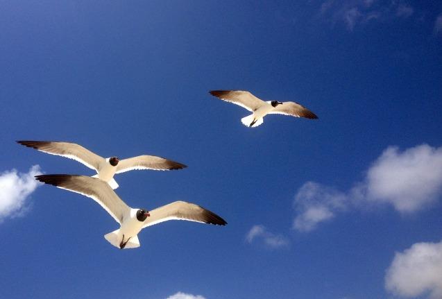 seagulls-401461_1280