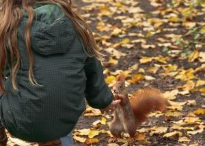 squirrel-528067_640