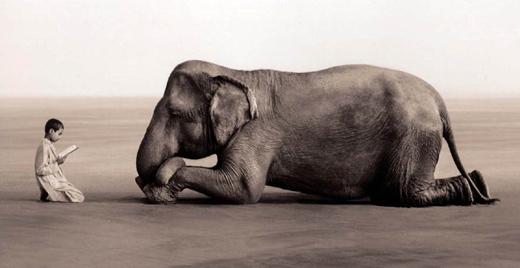 ashesandsnow-org-elephant2